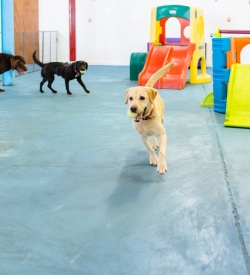 suffolk_canine_creche_day-creche