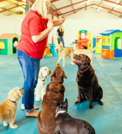 suffolk_canine_creche_day_care5