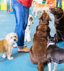 suffolk_canine_creche_paying-attention-2